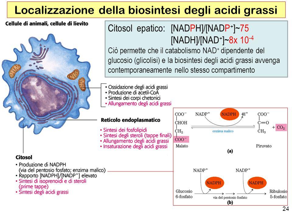 Localizzazione della biosintesi degli acidi grassi