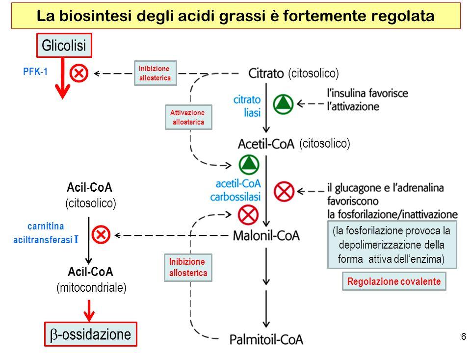 La biosintesi degli acidi grassi è fortemente regolata