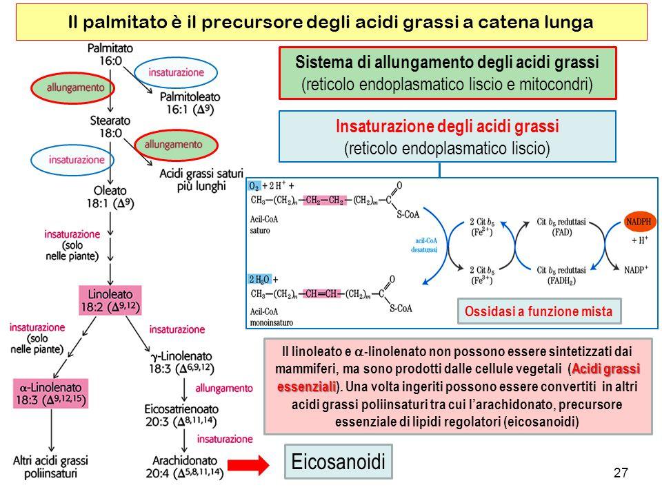 Il palmitato è il precursore degli acidi grassi a catena lunga
