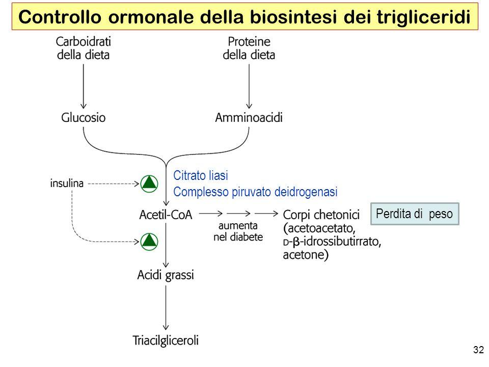 Controllo ormonale della biosintesi dei trigliceridi