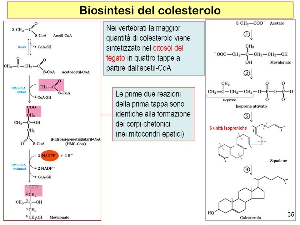 Biosintesi del colesterolo