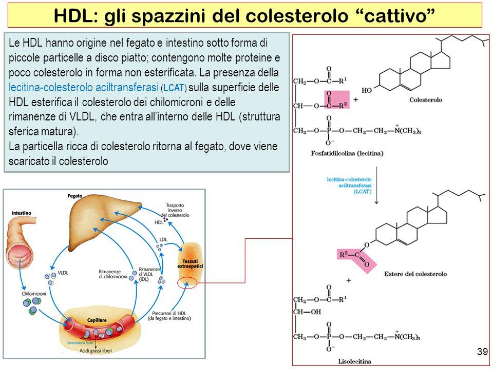HDL: gli spazzini del colesterolo cattivo