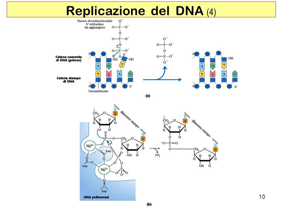 Replicazione del DNA (4)