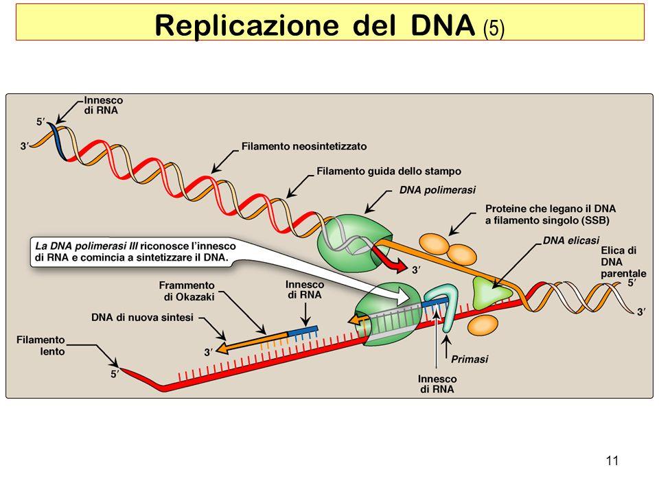 Replicazione del DNA (5)