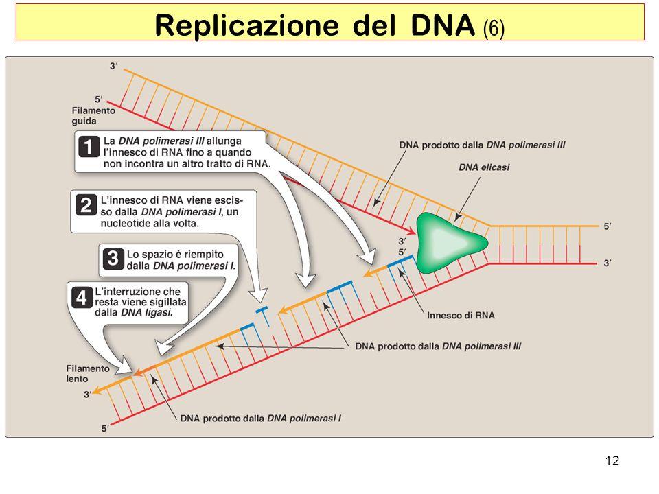 Replicazione del DNA (6)