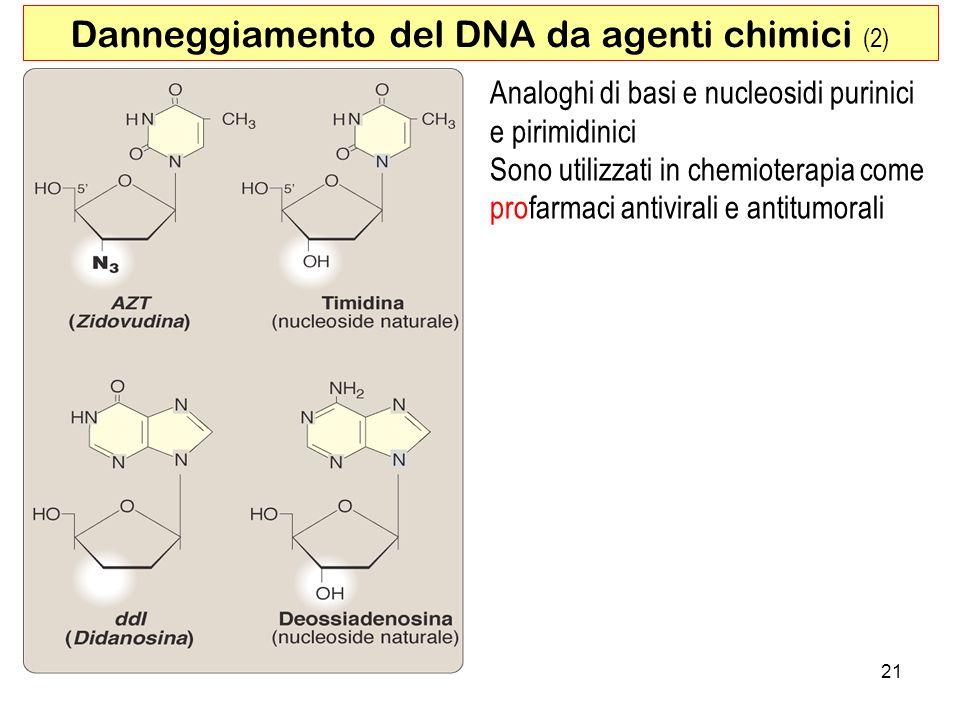Danneggiamento del DNA da agenti chimici (2)