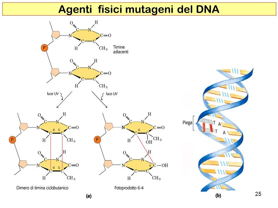 Agenti fisici mutageni del DNA