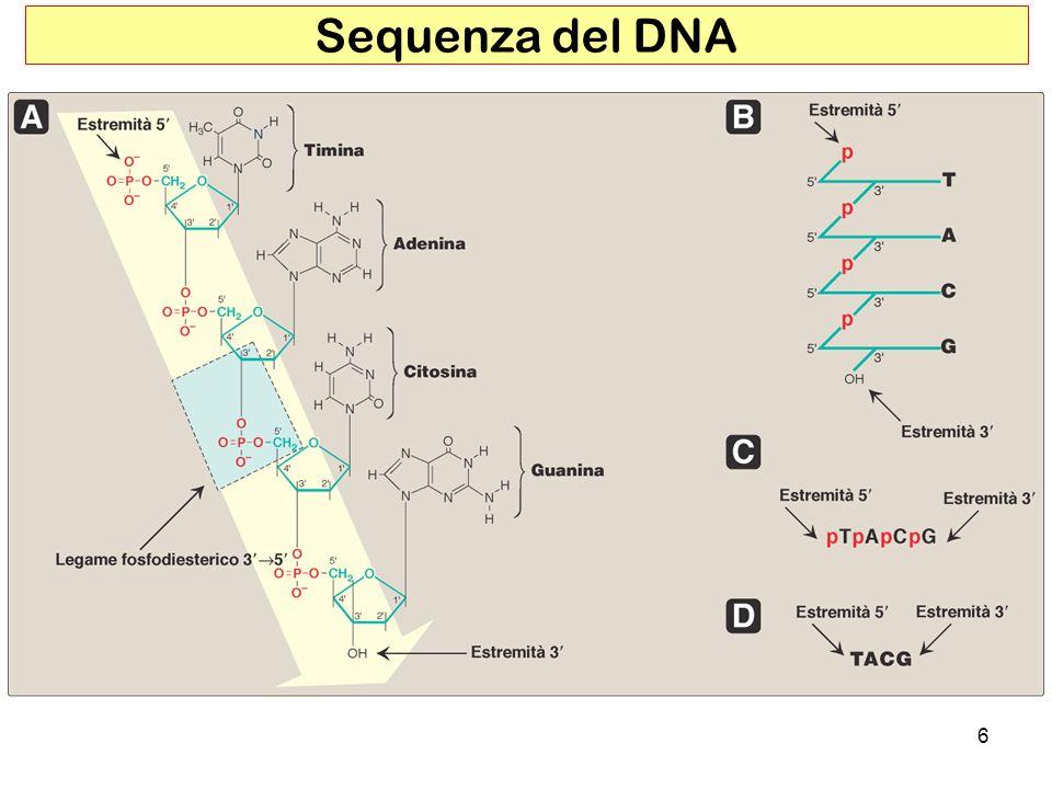 Sequenza del DNA