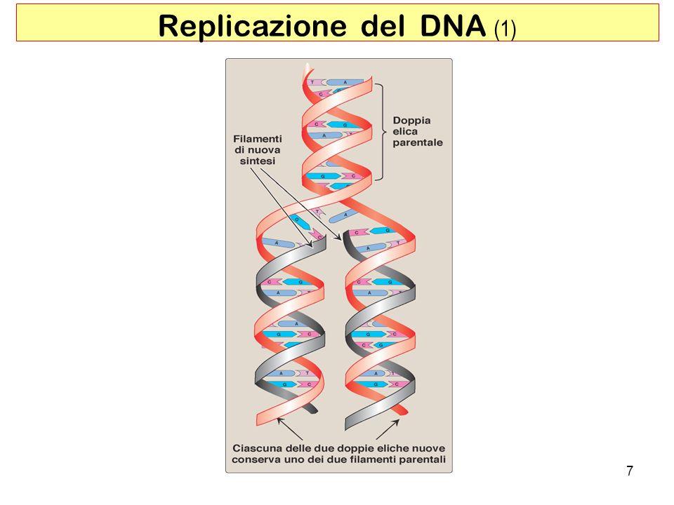 Replicazione del DNA (1)
