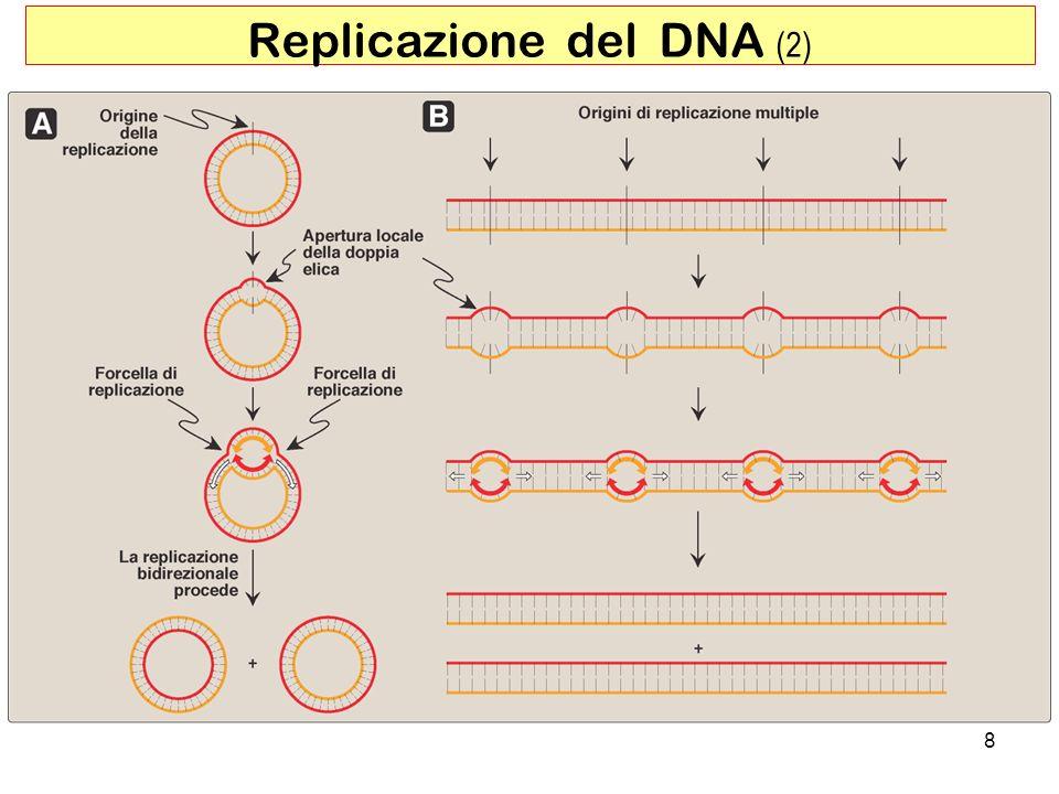 Replicazione del DNA (2)