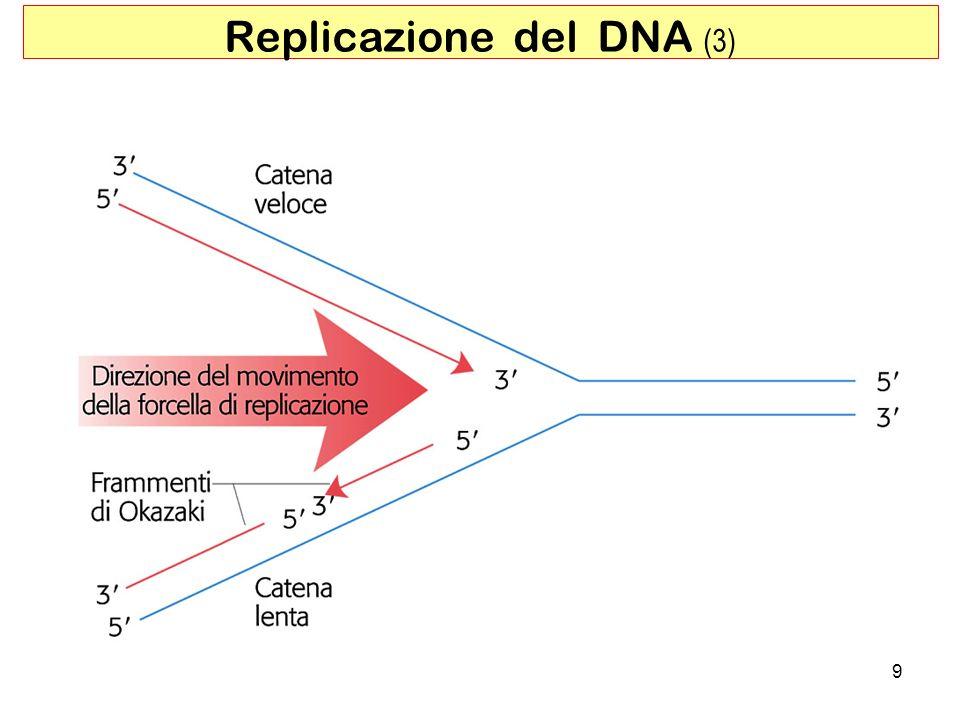 Replicazione del DNA (3)