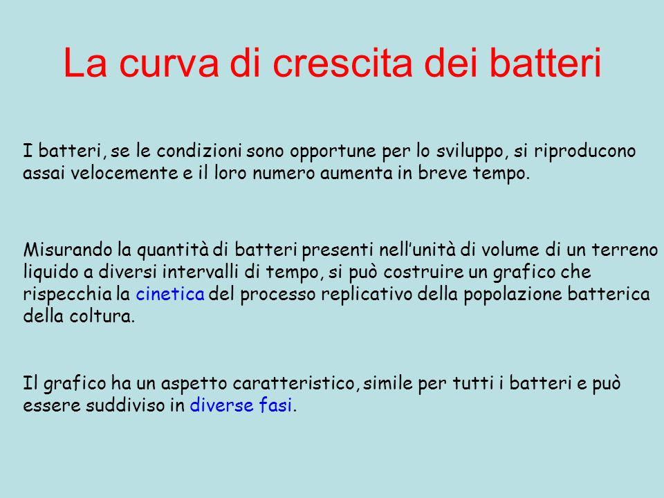 La curva di crescita dei batteri