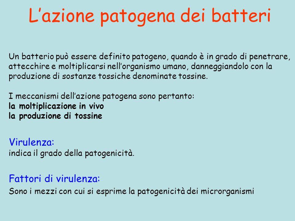 L'azione patogena dei batteri