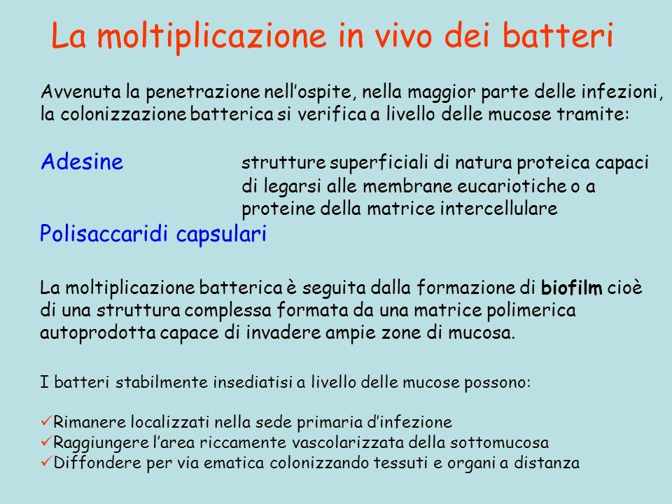 La moltiplicazione in vivo dei batteri