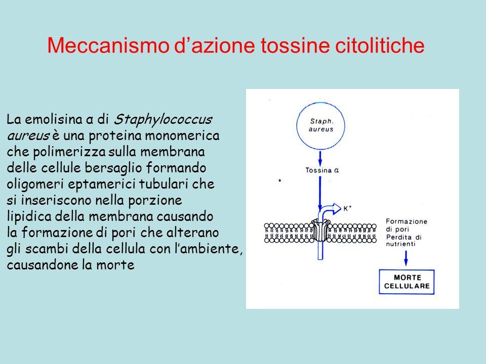 Meccanismo d'azione tossine citolitiche