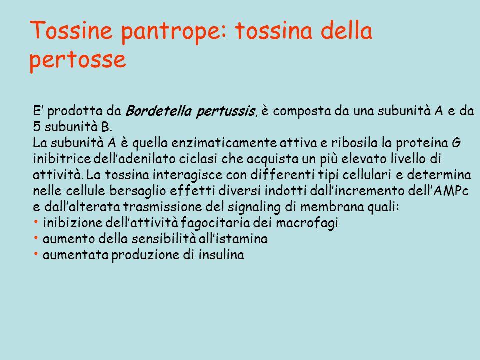 Tossine pantrope: tossina della pertosse
