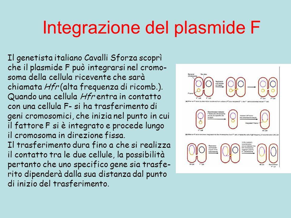 Integrazione del plasmide F