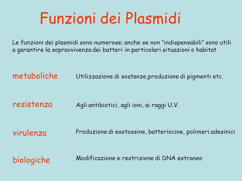 Funzioni dei Plasmidi metaboliche resistenza virulenza biologiche