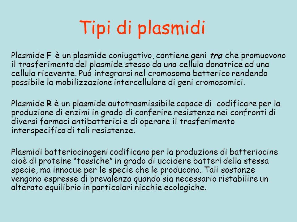 Tipi di plasmidi