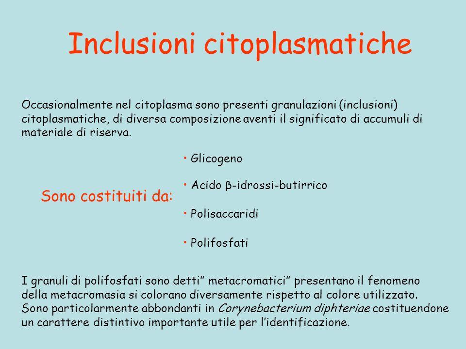 Inclusioni citoplasmatiche