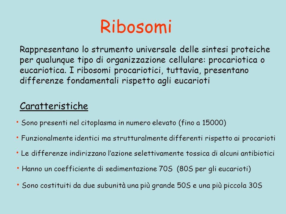 Ribosomi Caratteristiche