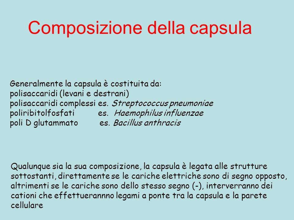 Composizione della capsula