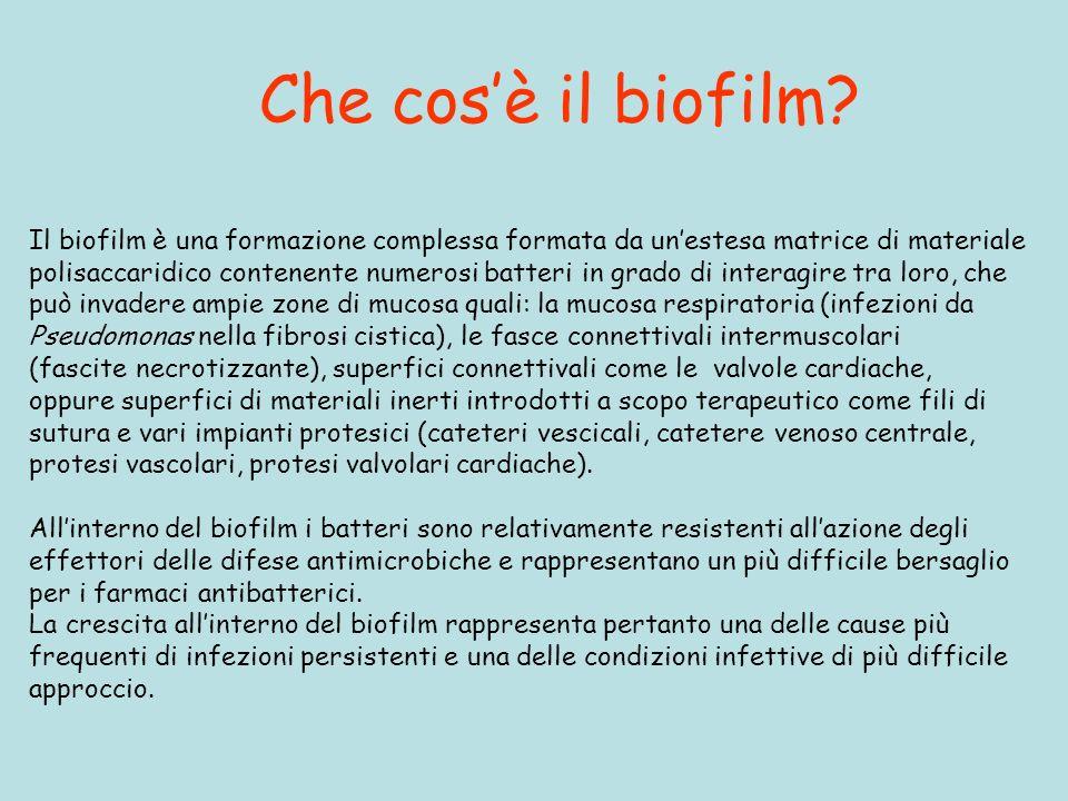 Che cos'è il biofilm Il biofilm è una formazione complessa formata da un'estesa matrice di materiale.