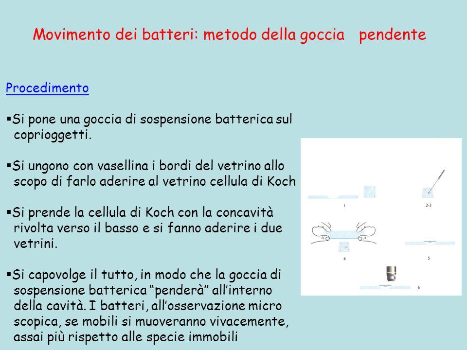 Movimento dei batteri: metodo della goccia pendente