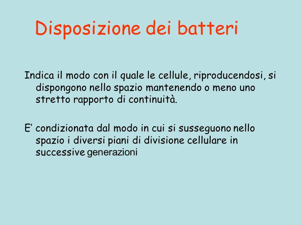 Disposizione dei batteri