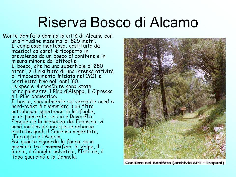 Riserva Bosco di Alcamo