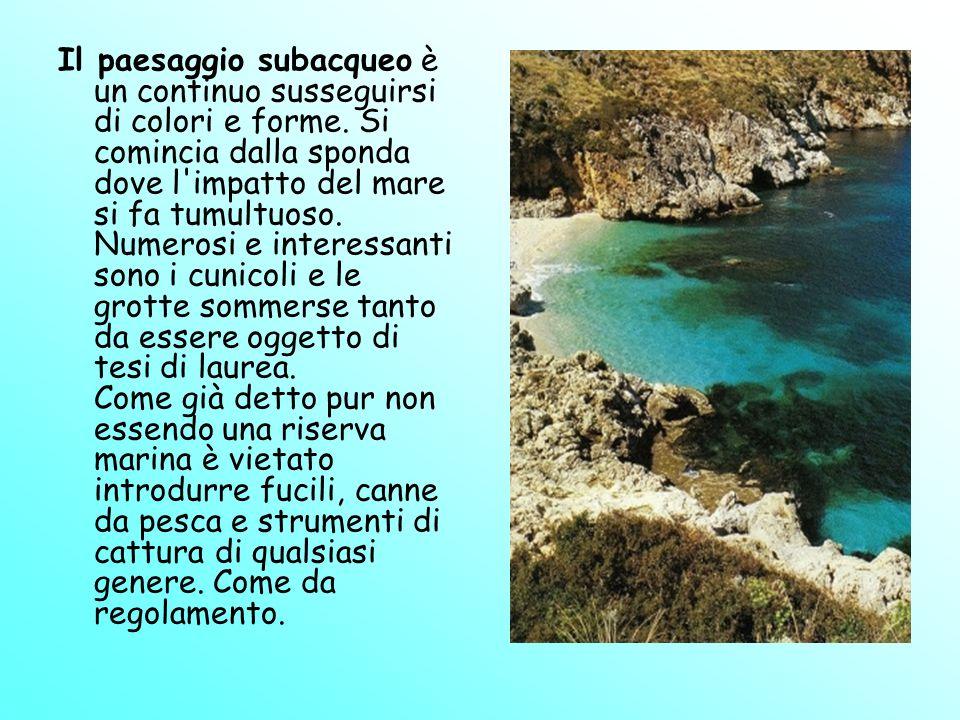Il paesaggio subacqueo è un continuo susseguirsi di colori e forme