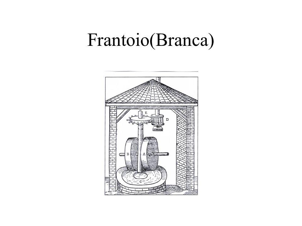 Frantoio(Branca)
