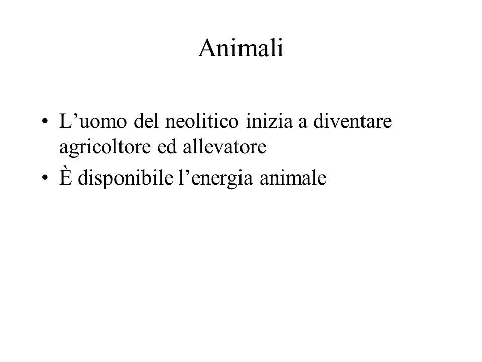 Animali L'uomo del neolitico inizia a diventare agricoltore ed allevatore.