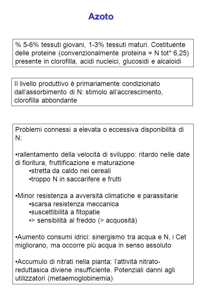 Azoto% 5-6% tessuti giovani, 1-3% tessuti maturi. Costituente delle proteine (convenzionalmente proteina = N tot* 6,25)