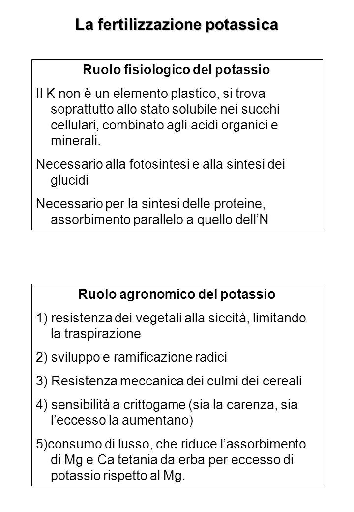 La fertilizzazione potassica Ruolo fisiologico del potassio