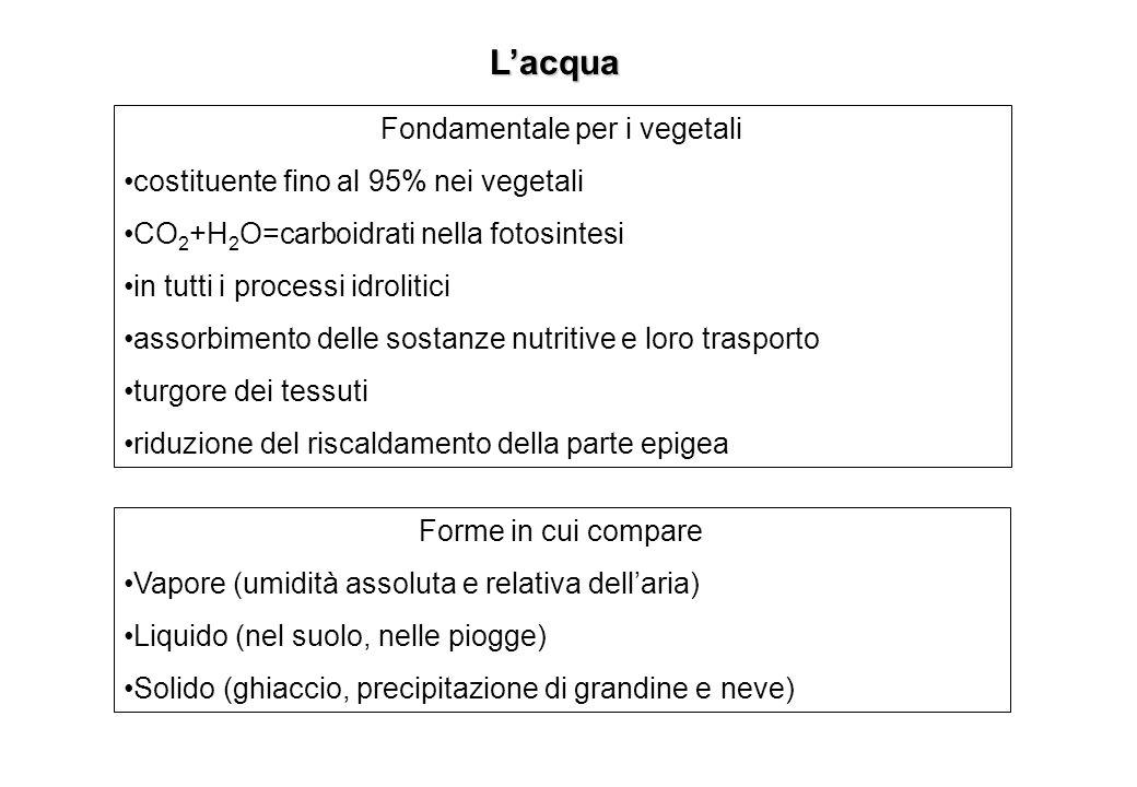 Fondamentale per i vegetali