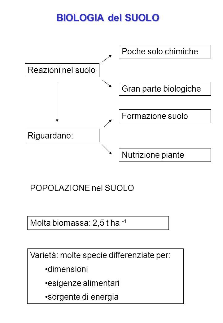 BIOLOGIA del SUOLO Poche solo chimiche Reazioni nel suolo