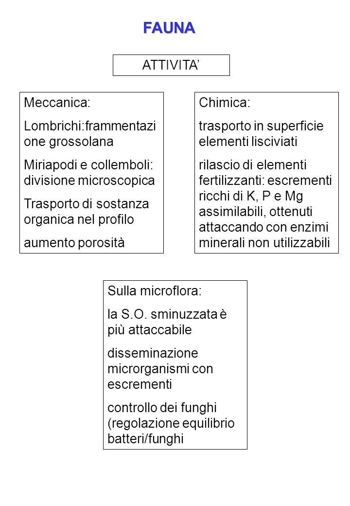 FAUNA ATTIVITA' Meccanica: Lombrichi:frammentazione grossolana