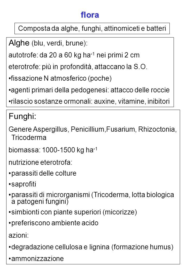 Composta da alghe, funghi, attinomiceti e batteri