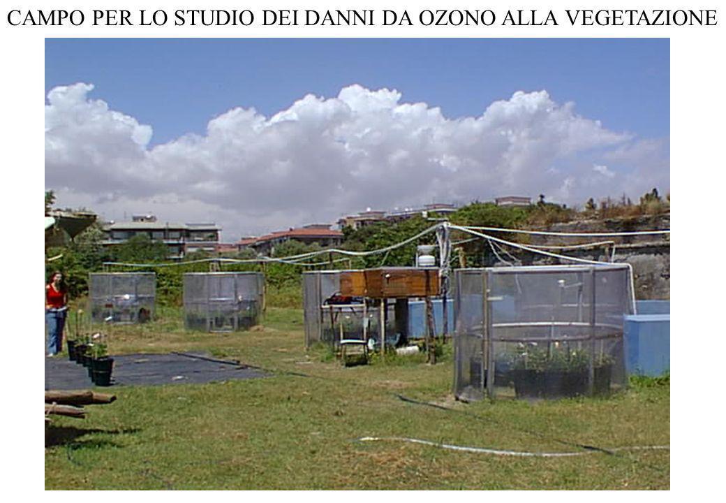 CAMPO PER LO STUDIO DEI DANNI DA OZONO ALLA VEGETAZIONE