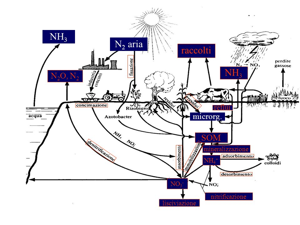 NH3 N2 aria raccolti SOM N2O, N2 microrg. reflui mineralizzazione NH4+