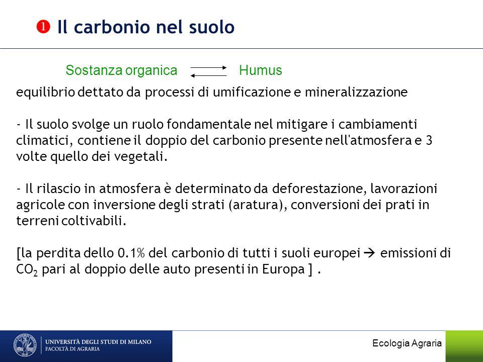  Il carbonio nel suolo Sostanza organica Humus