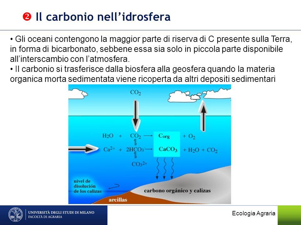  Il carbonio nell'idrosfera