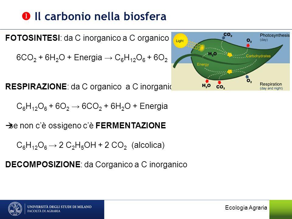  Il carbonio nella biosfera