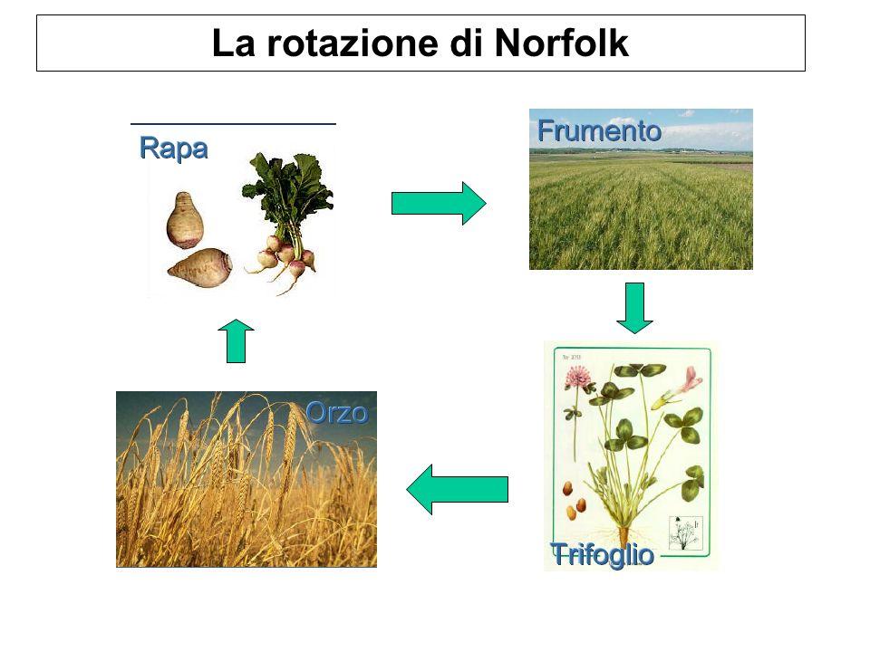 La rotazione di Norfolk