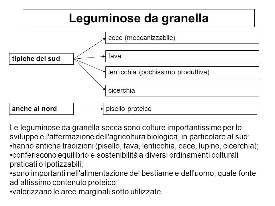 Leguminose da granella