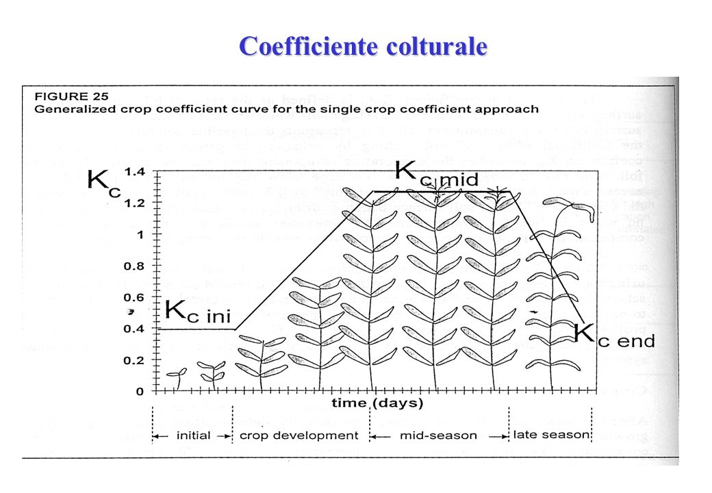Coefficiente colturale