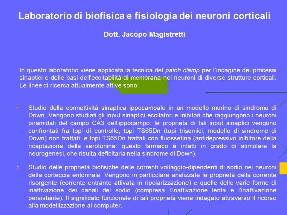 Laboratorio di biofisica e fisiologia dei neuroni corticali Dott