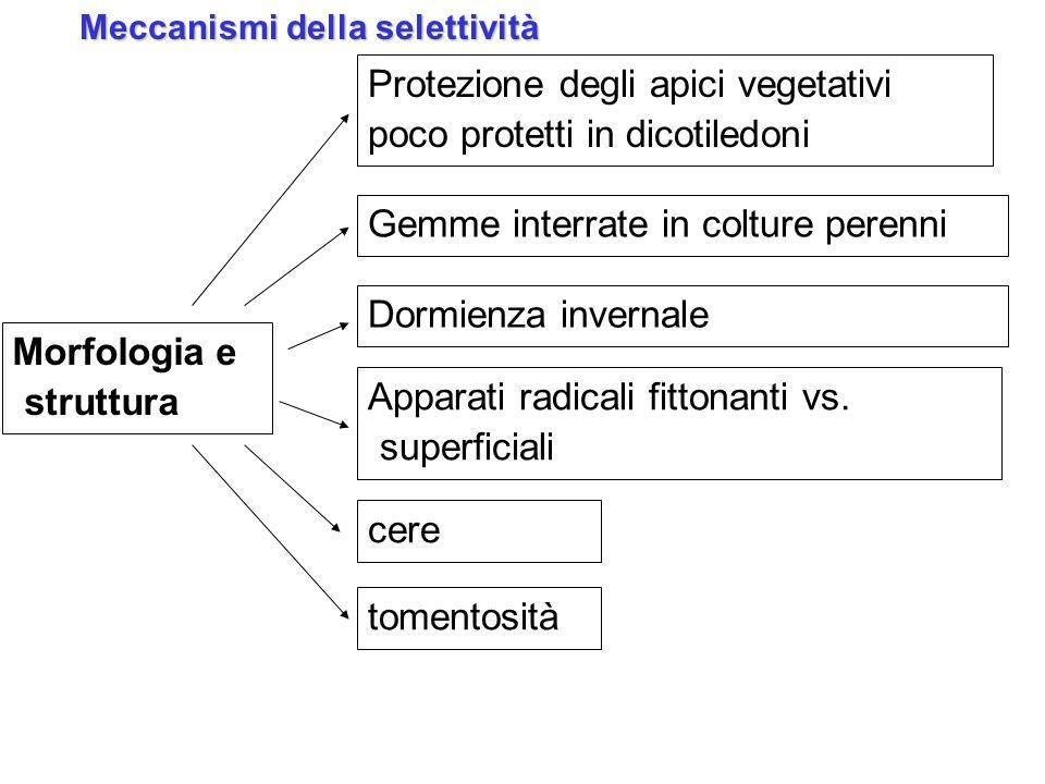 Meccanismi della selettività