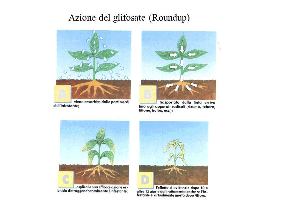 Azione del glifosate (Roundup)